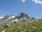 Trekking mit Packlamas Lavaz